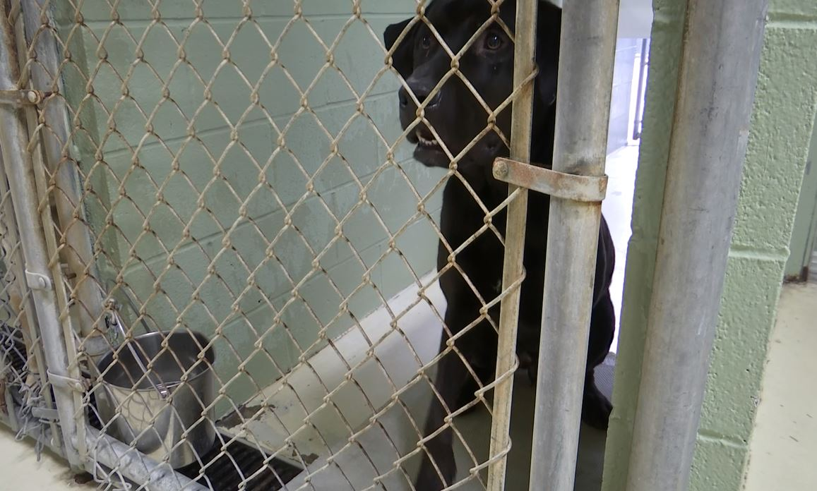 horry county animal care center_217026