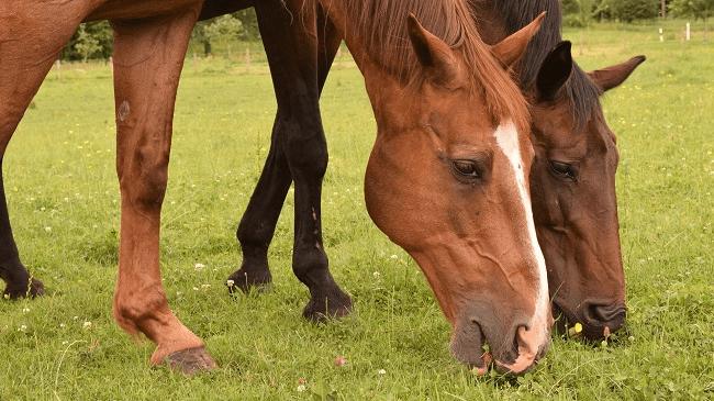 generic horse_258809
