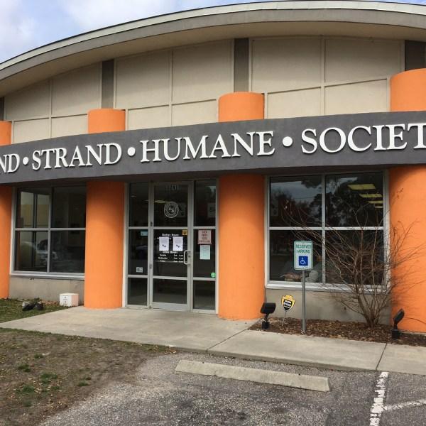 grand strand humane society_369017