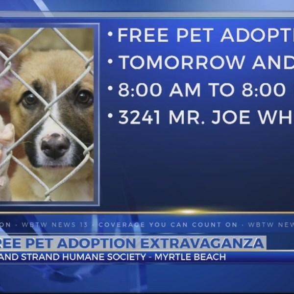Grand_Strand_Humane_Society_pet_adoption_0_20180721003943