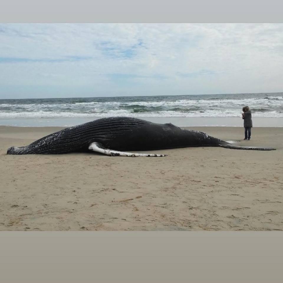 whale2_1550585933362.jpg