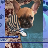 Pet of the Weekend: Bogey