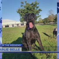 Pet of the Weekend: Karlie-Belle