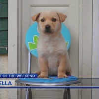 Pet of the Weekend: Bella