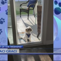 Pet of the Weekend: Maci Graci