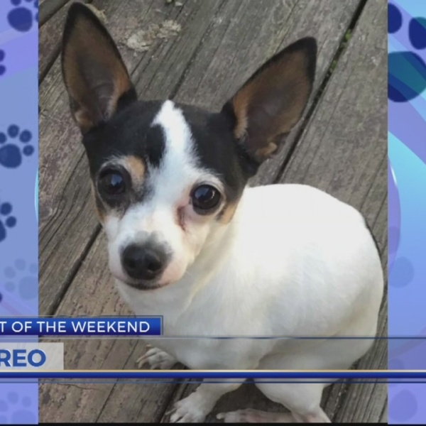 Pet of the Weekend: Oreo