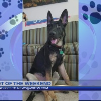 Pet of the Weekend: Buddy Green