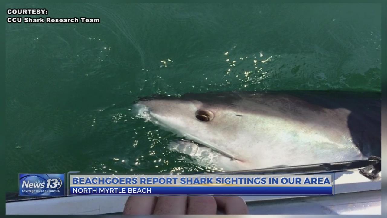 Shark Sightings Along The Grand Strand