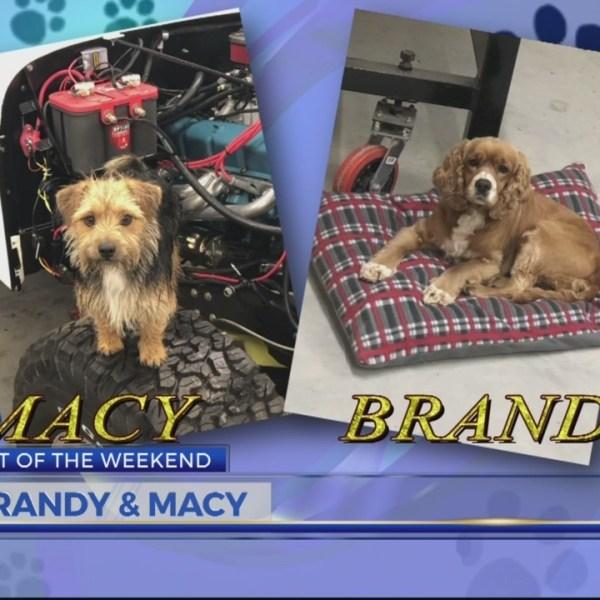 Pet of the Weekend Macy & Brandy