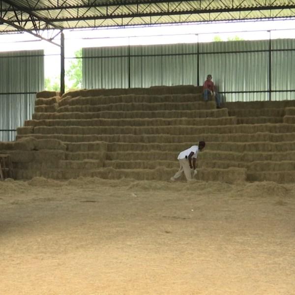 Sever drought impacts Olanta hay farmer