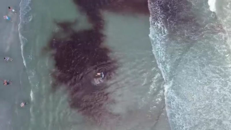 WATCH: Pawleys Island beach-goers push stranded whales back into ocean