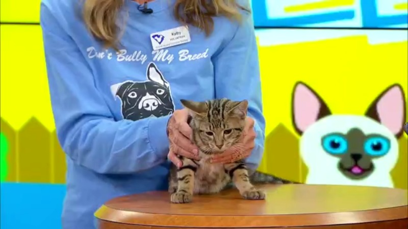 News13 Pet of the Weekend: Patricia