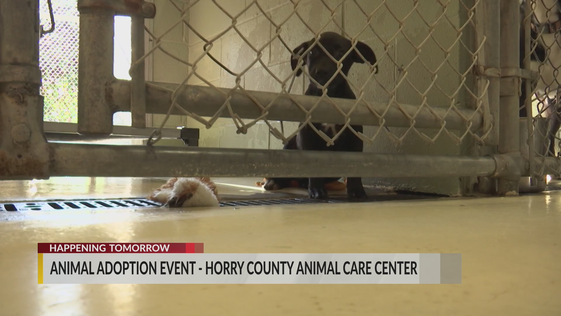 Horry County Animal Care Center to hold adoption event